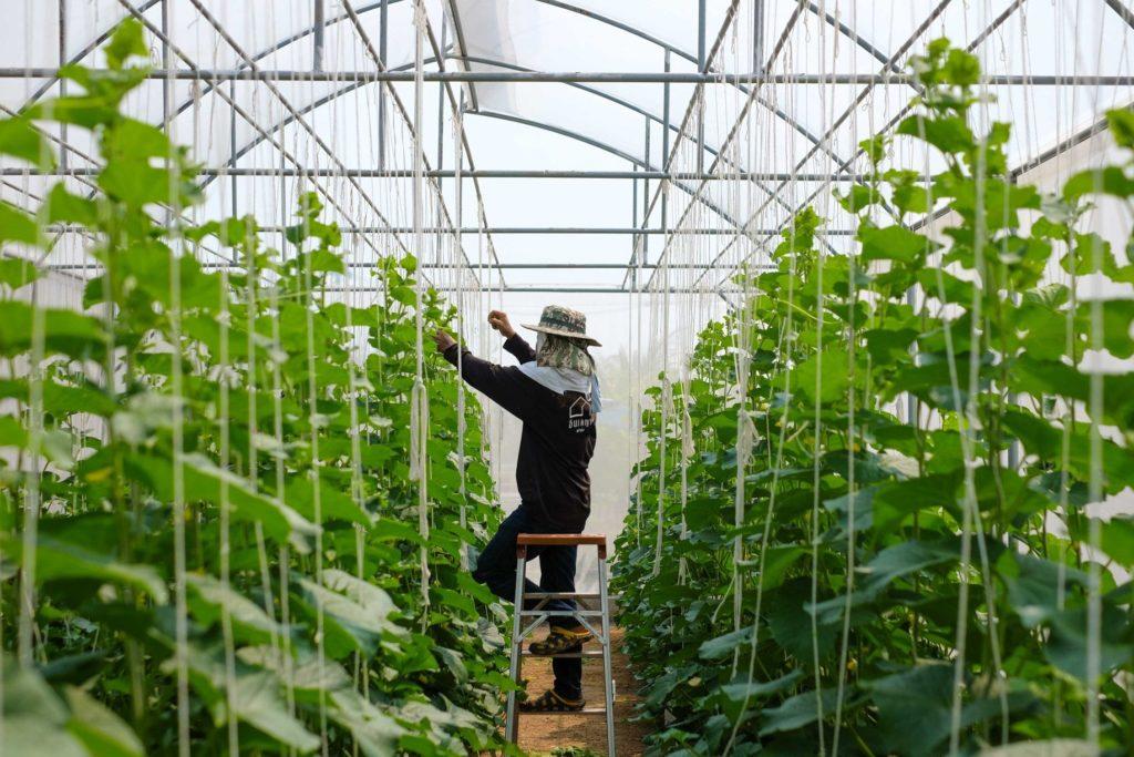 ฟาร์มผัก รีสอร์ทอินเลญา